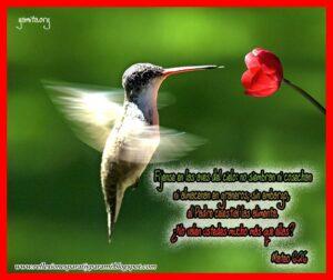 Imágenes de Reflexiones con Aves (2)