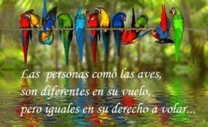 Imágenes de Reflexiones con Aves (4)
