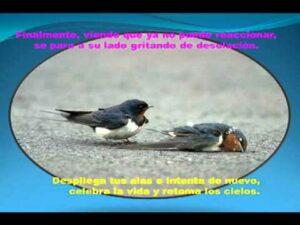 Imágenes de Reflexiones con Aves (5)