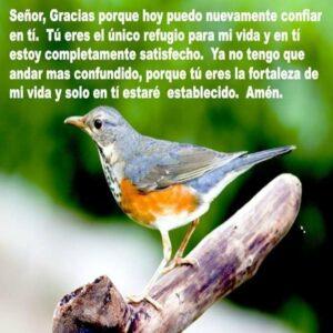 Imágenes de Reflexiones con Aves (8)
