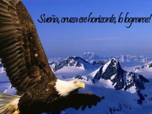 Imágenes de Reflexiones con Aves (9)