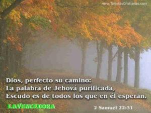 Imágenes de Reflexión con Dios (2)